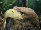 Centar za promatranje ptica_25