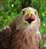 Centar za promatranje ptica_28